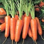 Чем полезна морковь
